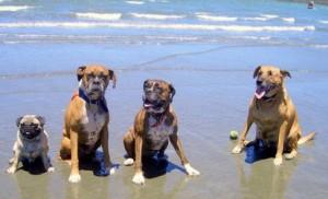 Urlaub in Spanien mit Hund – Spanien Reisen mit Haustieren – Ferien in Spanien!